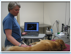 Picture: Dr. Mary Stankovics gathers painless ultrasound imagery from a patient.